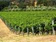 dutch henry winery vineyard