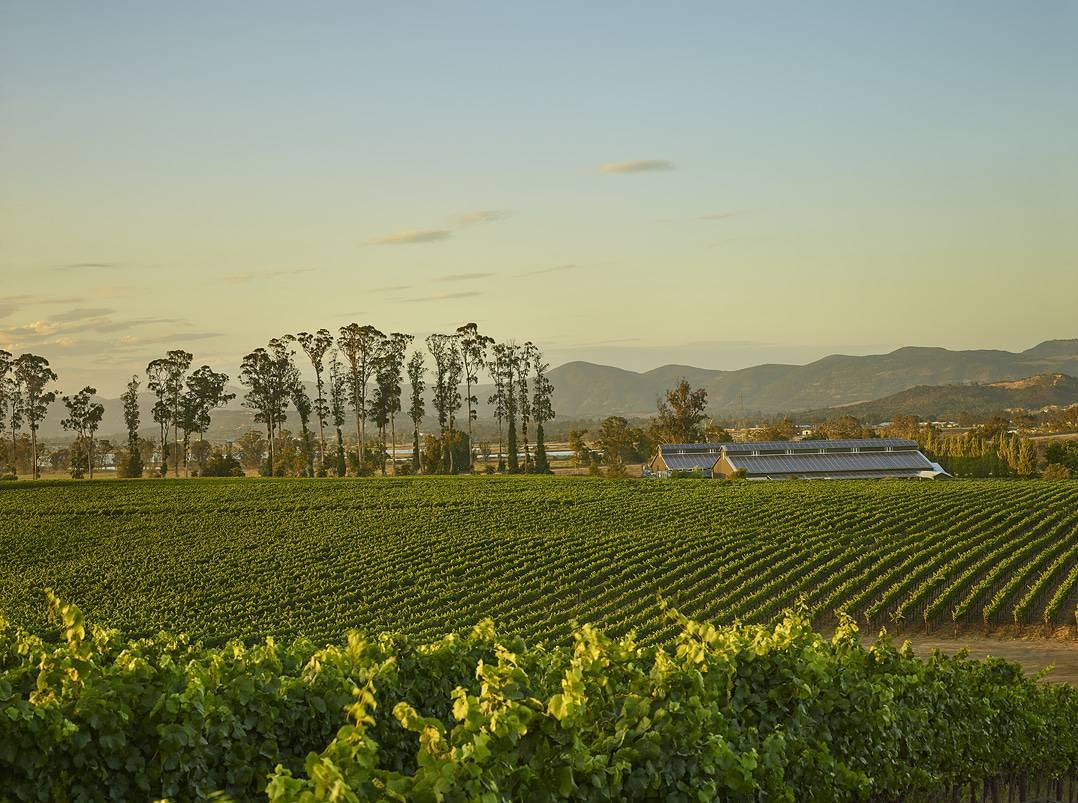 starmont winery vineyards