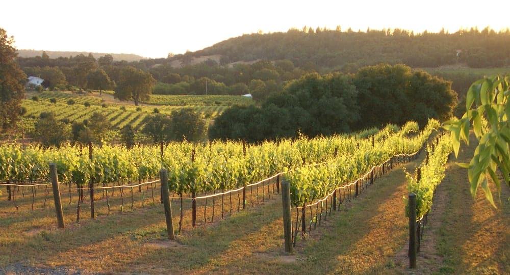 iron hub winery sierra foothills