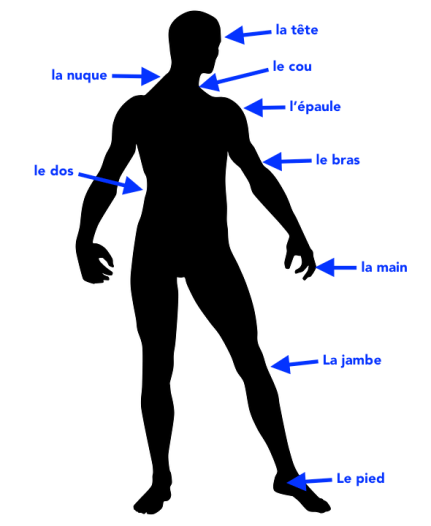 human-body-1261318_960_720