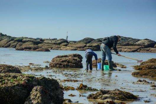 La pêche à pied à marée basse.