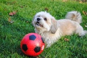 Piesa de sambata: Fotbalist de liga a III-a