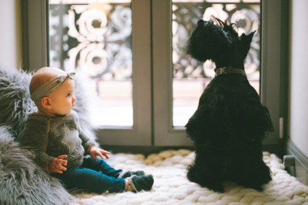 bébé chien noir