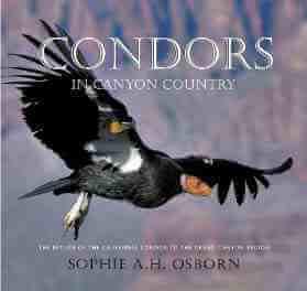 Sophie Osborn on Saving the California Condor 2