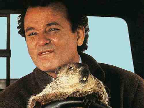 Groundhog Day - Bill Murray and Groundhog