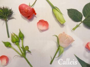 pèle-mêle de fleurs