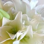 Des bouquets de mariée qui bousculent les traditions!