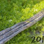 3 tendances végétales pour 2018
