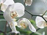Quelques conseils pour prendre soin de ses orchidées