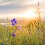 Plaidoyer pour les mauvaises herbes