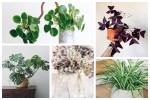 Quelles plantes pour mon intérieur? Végétaliser son intérieur en fonction de son profil