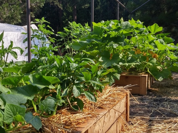 permaculture