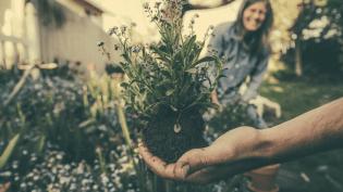 Planten najaar