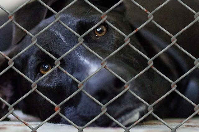 dog 509105 640 - Homeless dogs to find forever homes in Pennsylvania