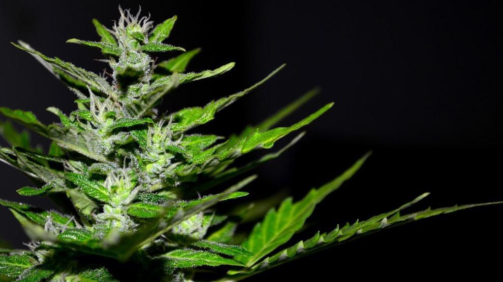 cannabis 2761102 1280 - Does Pot Really Dull a Teen's Brain?