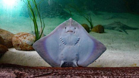 sting ray 1655189 1280 - New Stingray & Shark Interaction at Miami Seaquarium