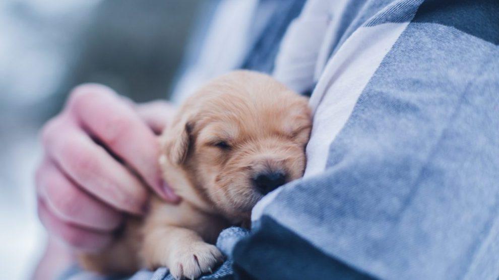 Puppy Pet Sales