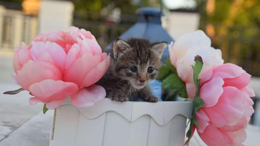 Cat 2 - ¡No Secuestre los Gaticos callejeros!