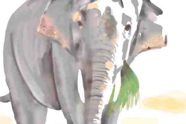 elephant water colours