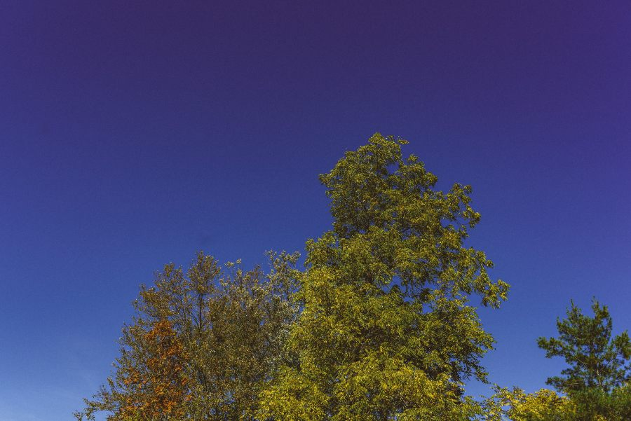 niagara trees