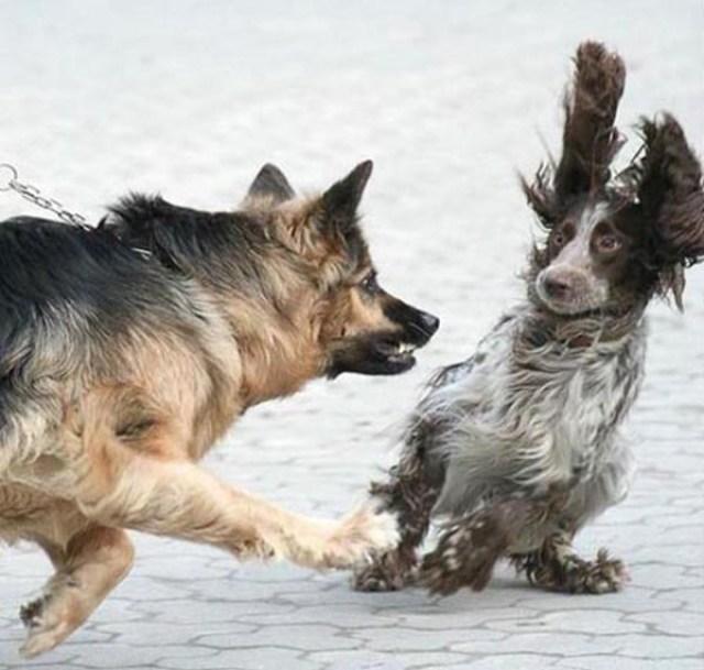 Cuando hablamos de perros, la gran mayoría no somos conscientes de cómo, casi siempre por nuestra culpa, van encadenando problemas uno tras otro.