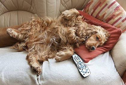 article400_dog-generic-couch-420x0