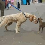 El saludo con perro atado