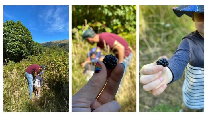 foraging for blackberries - recipe idea for kids