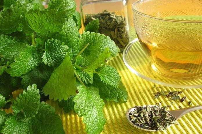 Quais são os benefícios do chá de erva cidreira?
