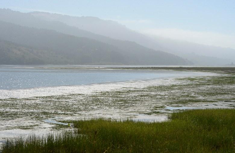 La laguna de Bolinas el 29 de julio de 2019. Foto de Alan Dep, Marin Independent Journal