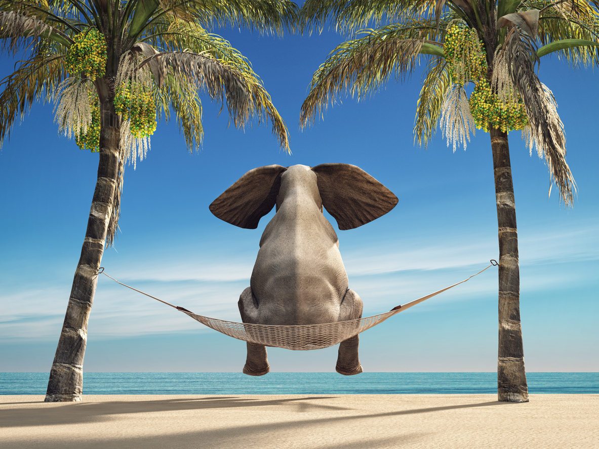 An elephant sitting in a hammock on the beach and look at sea.