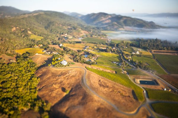 Aerial view of a misty morning over the Napa Valley, where vineyards are claiming oak-studded wildlands.