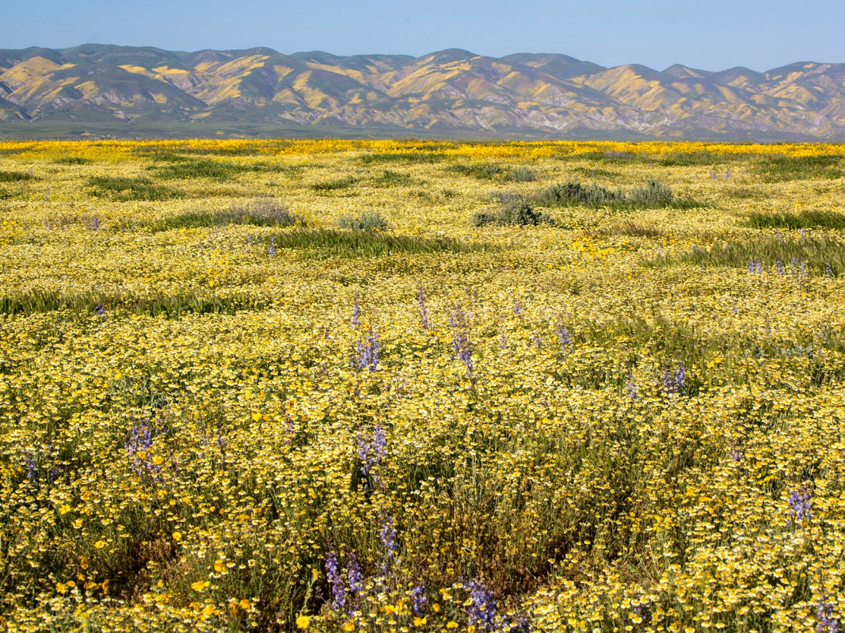 A federal plan could allow oil exploration at the edge of California's Carrizo Plain National Monument. Photo by Bureau of Land Management via Flickr