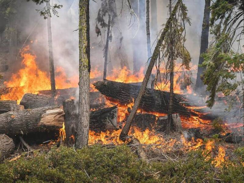 The Creek Fire burns downed logs in the forest off of Highway 168 south of Huntington Lake on Sunday, Sept. 13, 2020. Photo by Craig Kohlruss, The Fresno Bee