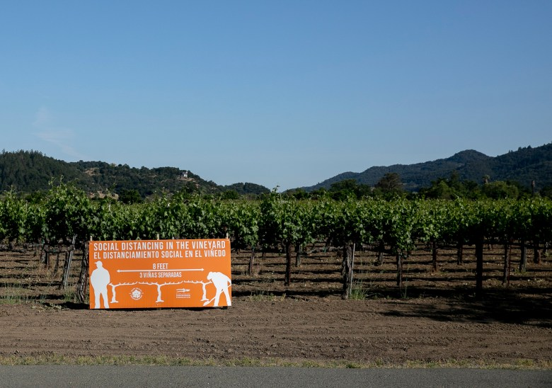 A sign encouraging vineyard workers to practice social distancing is posted among the grapevines on May 6, 2020 in Oakville. Napa County does not collect data on workplace coronavirus outbreaks. Photo by Anne Wernikoff for CalMatters