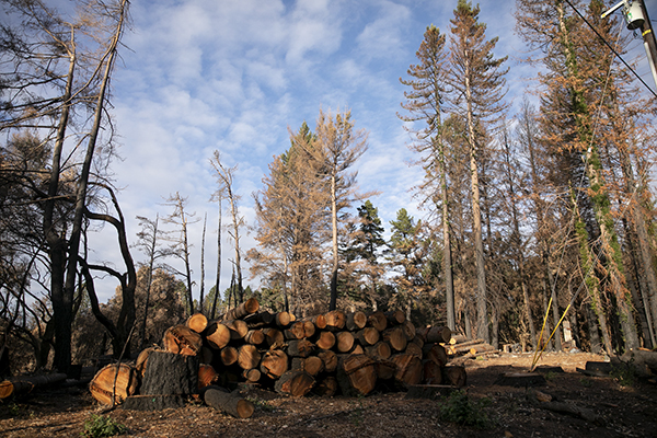 A timber deck of dead trees cut down by PG&E following the CZU Lightening complex fires in Bonny Doon on Dec. 12, 2020. Photo by Anne Wernikoff for CalMatters
