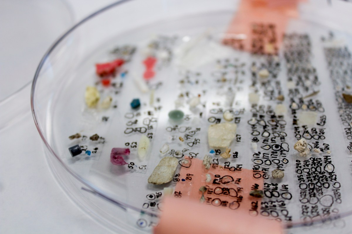 Microplastics collected in the San Francisco Bay Area are identified and labeled accordingly for an ongoing study in a lab headed by Chelsea Rochman, an assistant professor at the University of Toronto. Photo by Cole Brookson courtesy of Rochman Lab