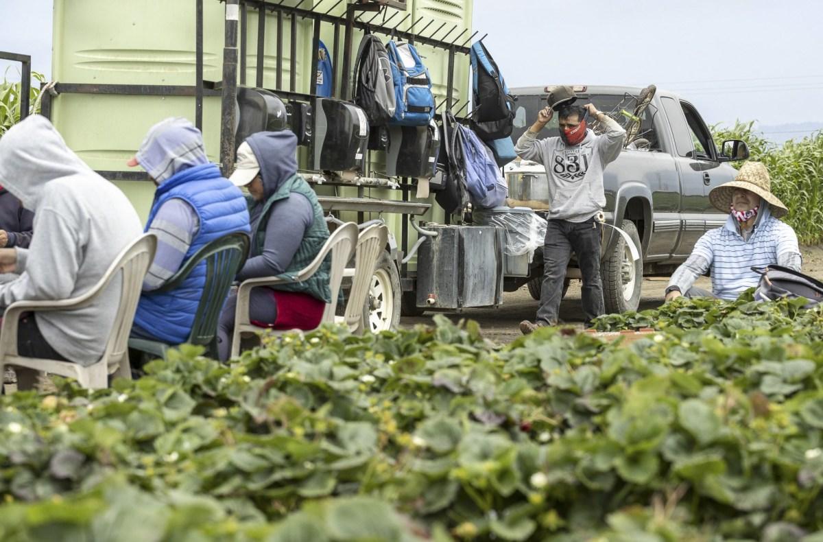 California está modificando el programa Vivienda para la Cosecha para los trabajadores agrícolas que dieron positivo por COVID-19 al ofrecer hasta $ 1,000 en asistencia en efectivo, además de permitir que los trabajadores agrícolas se refugien en sus casas para aumentar la participación. La expansión se lanzará en abril para la mayoría de los condados. Foto de David Rodríguez, The Salinas Californian