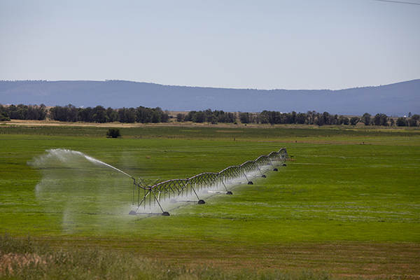 An irrigation system seen from the road outside of Adin, a small town in Modoc County, in July 2019. In response to increased drought risk, farmers and ranchers in all 58 California counties will become eligible for loans to assist with loss of crops, trees, land and livestock. Photo by Anne Wernikoff, CalMatters