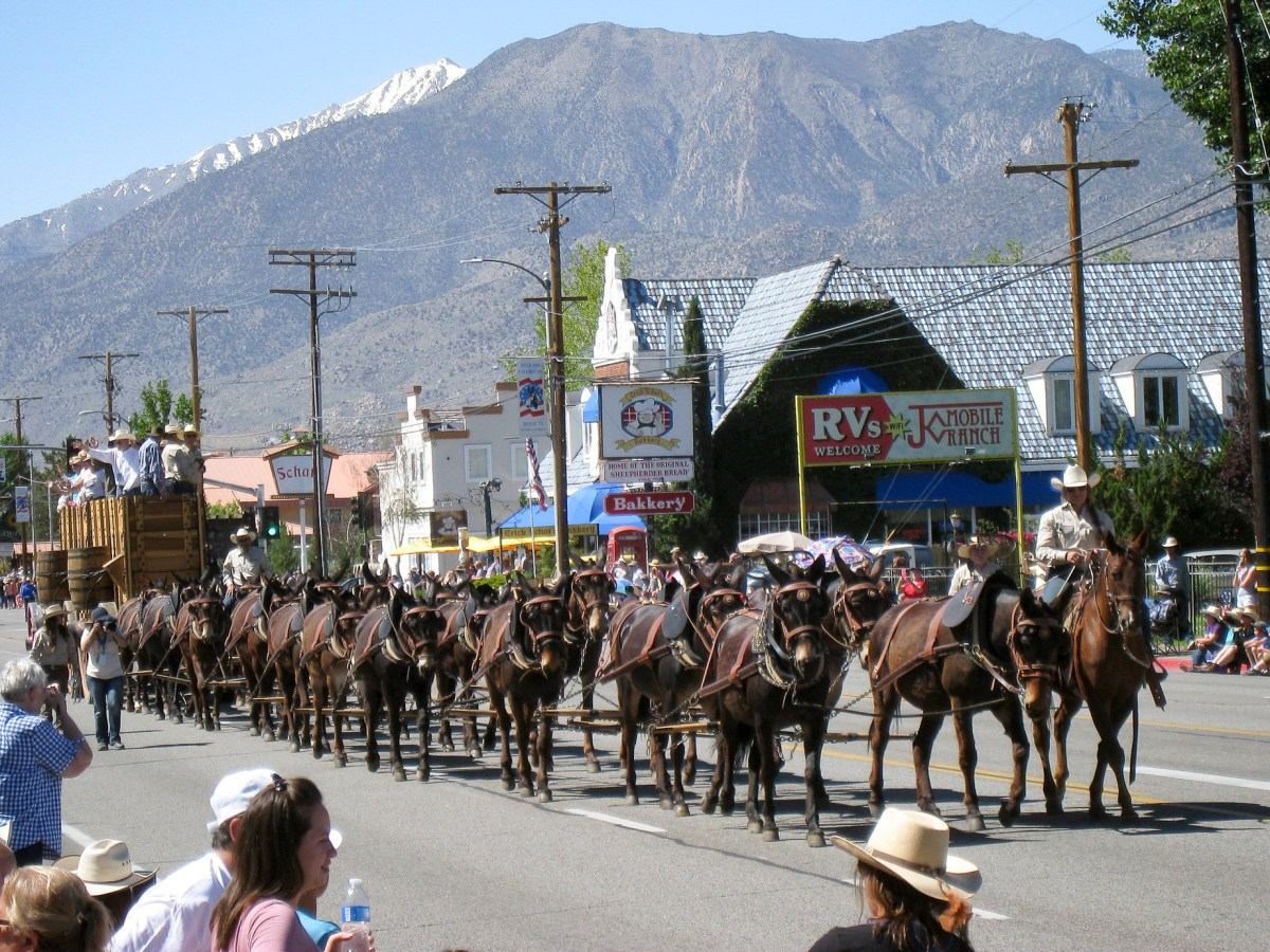 A mule team makes its way down North Main Street during the 2017 Mule Days parade in Bishop. Photo by The Greater Southwestern Exploration Company via Flickr (CC BY 2.0)