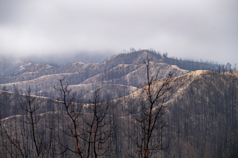 Damage from the 2020 CZU Lightning Complex Fire is seen at Big Basin Redwoods State Park in Boulder Creek on April 22, 2021. Photo by Nic Coury, AP Photo