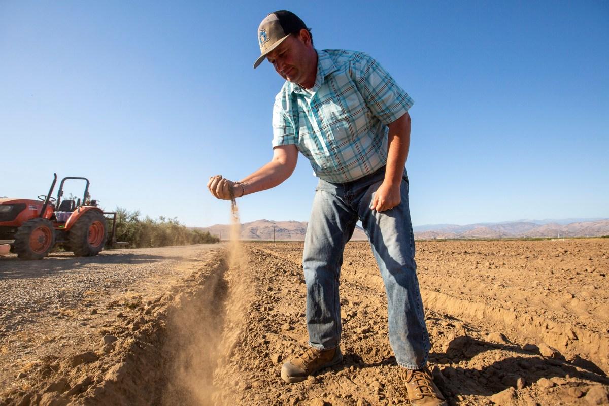 John Werner plantará un campo de pistachos en su tierra cerca de Visalia después de que perdió su cosecha de heno debido a la falta de lluvia. Foto de Shae Hammond para CalMatters