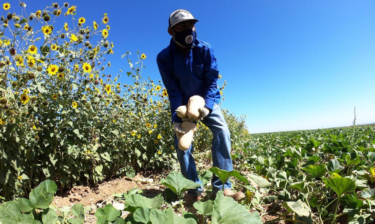 A Fresno-area politician wants California to prioritize struggling San Joaquin Valley farmworkers in a proposed pilot program that would put cash in the hands of some the state's impoverished residents. Photo by Juan Esparza Loera