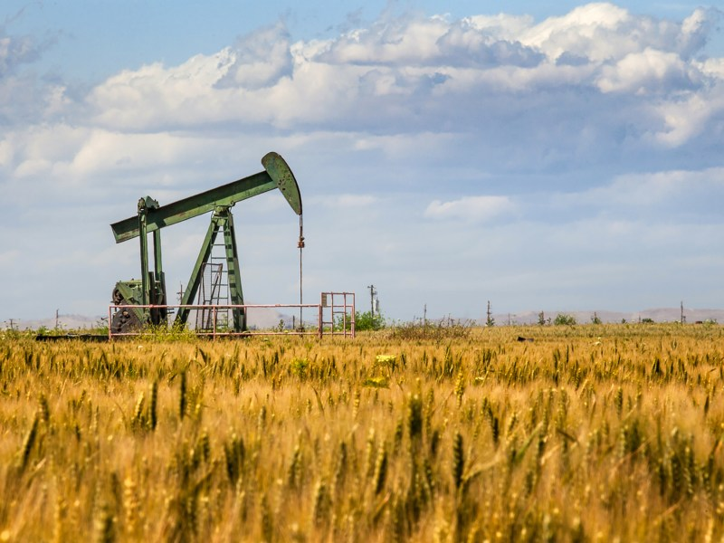 An oil pump looms over a wheat field in Bakersfield. Photo via iStock