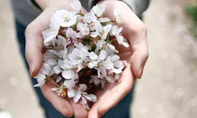 The Gardener Hand balm