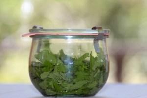 Recipe for homemade stevia extract