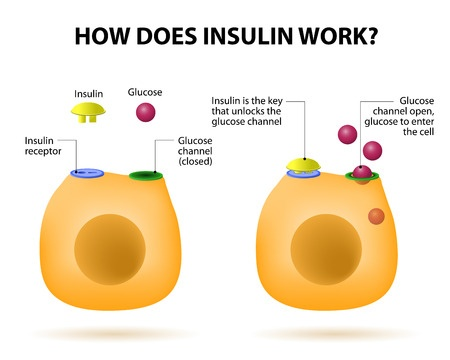 Image depicting how insulin opens the door to let glucose in the cell from CALMERme.com blog post
