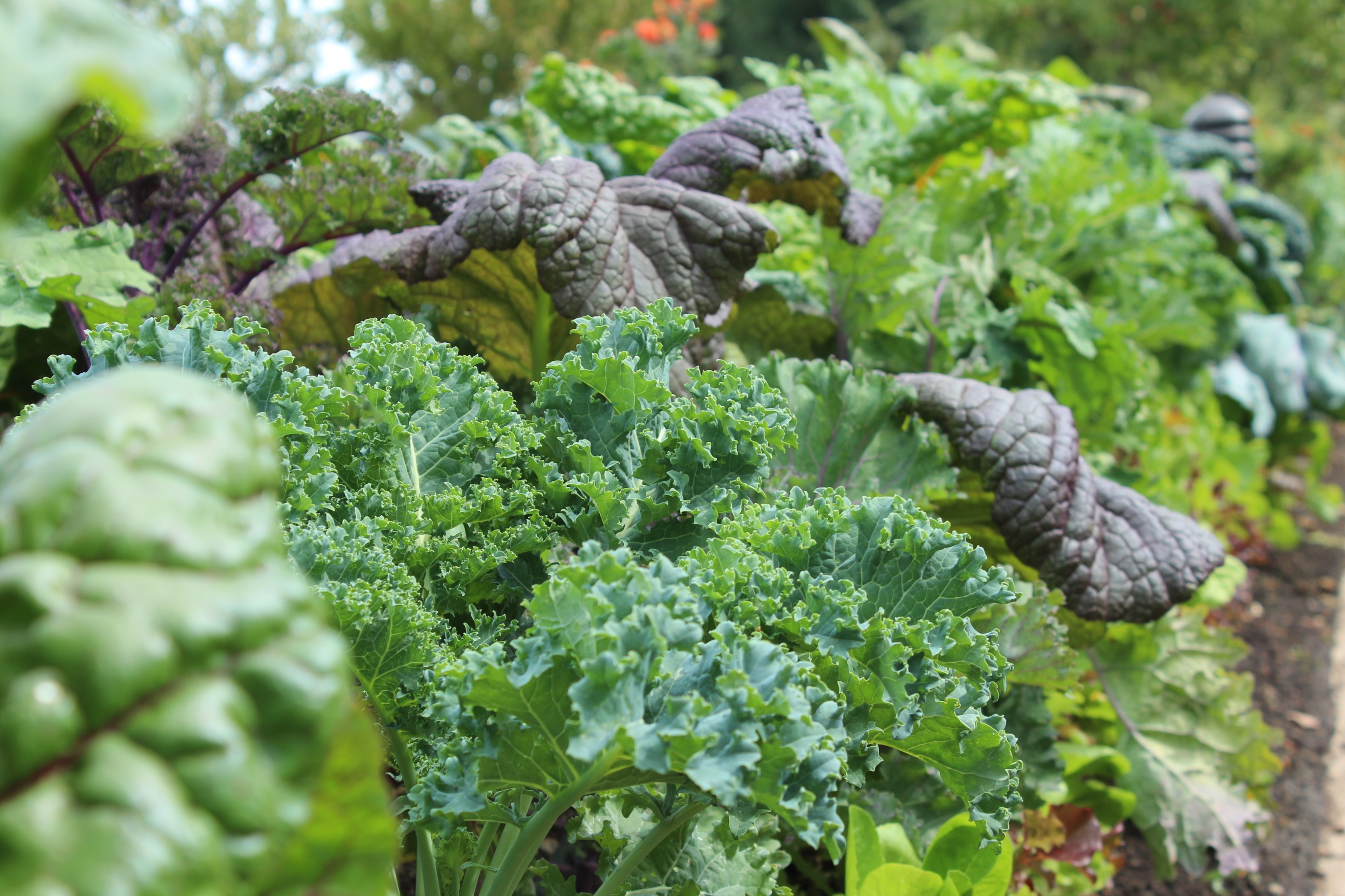 Image of green vegetables depicting dietary fiber source to help reduce insulin resistance from CALMERme.com