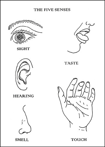 5 senses of human