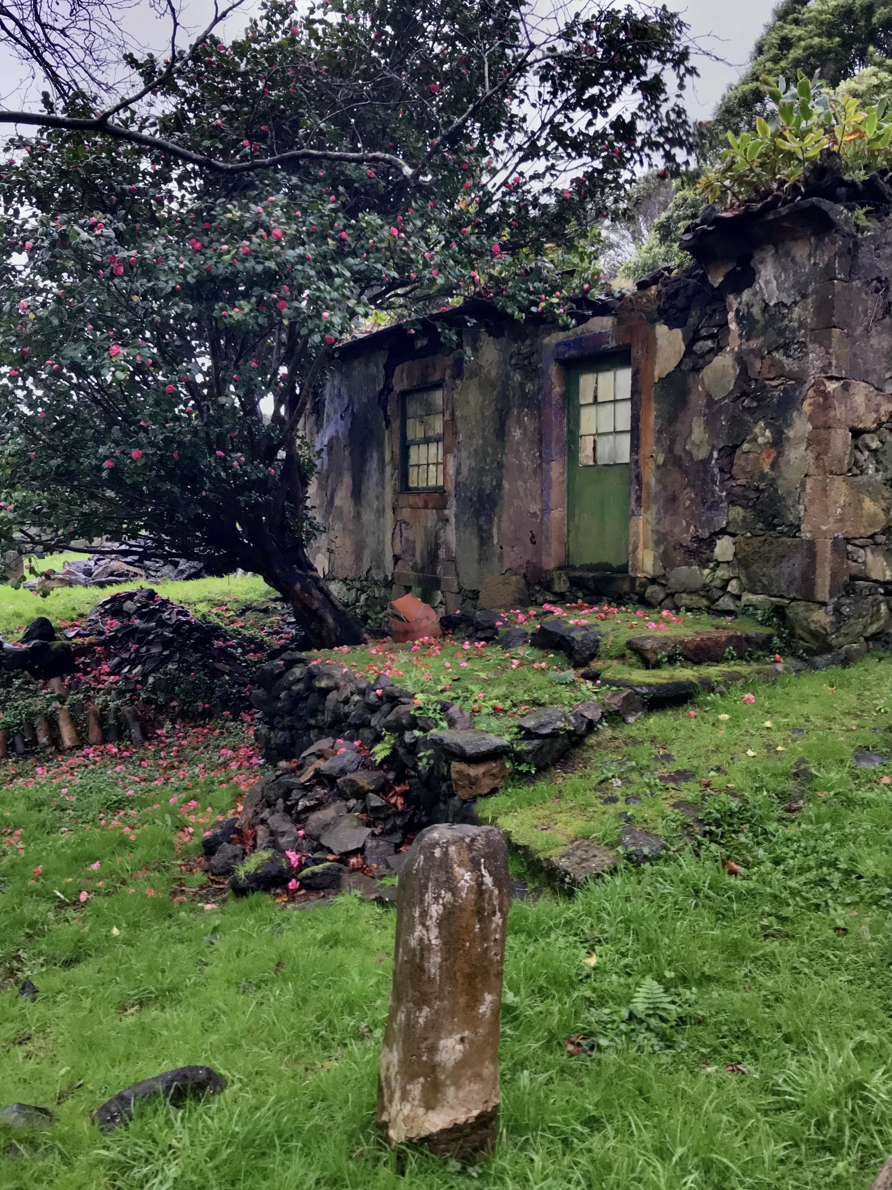 Casa das Figueiras and camellia tree